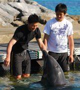 イルカと遊ぶ堂上直倫(左)と福田永将